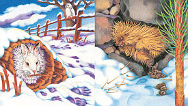 Animals Winter Sleep Sample content pg 4-5